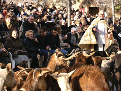 Animal blessing for Sant Antoni