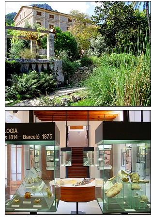 Paseo virtual por el jard n bot nico de s ller for Jardin botanico soller